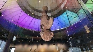 דובי ענק במנהרת רוח